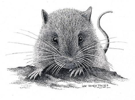 Lee Pantas - Woodland Jumping Mouse