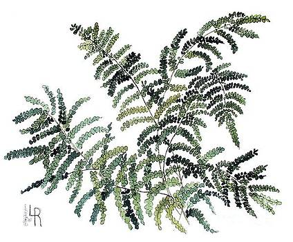 Woodland Maiden Fern by Laurie Rohner