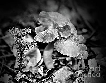 Woodland Mushrooms In Black And White by Smilin Eyes  Treasures