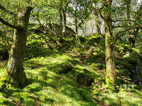 Woodland on Loughrigg Fell in the Lake District by Louise Heusinkveld