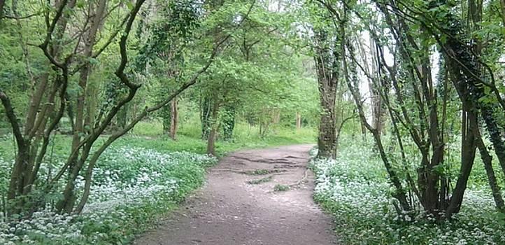 Woodland Path 1 by Julia Woodman