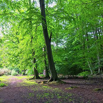 Woodland Path by Anne Kotan