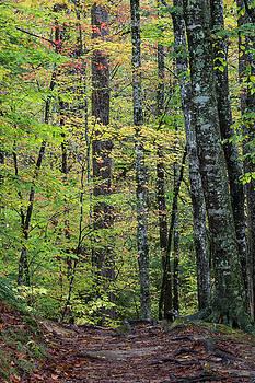 Woodland path autumn background passage by Natalie Schorr