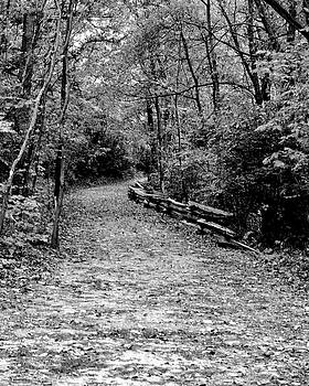 Woodland Path by Kimberly Blom-Roemer