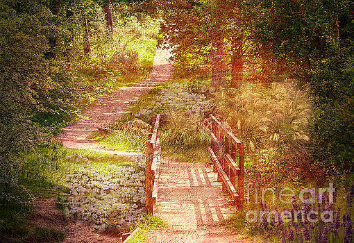 Woodland Path With Flowers by Clive Littin