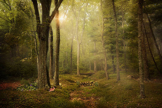 Woodland by Robin-Lee Vieira