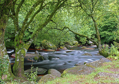 Woodland Stream by Jacqueline Moore