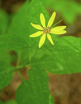 Woodland Sunflower by Lara Ellis