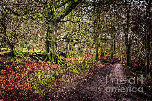 Woodland Track by Tony Priestley