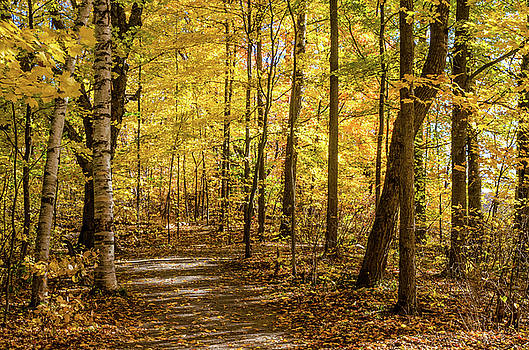 Woodland Trail at Mer Bleue by Rob Huntley