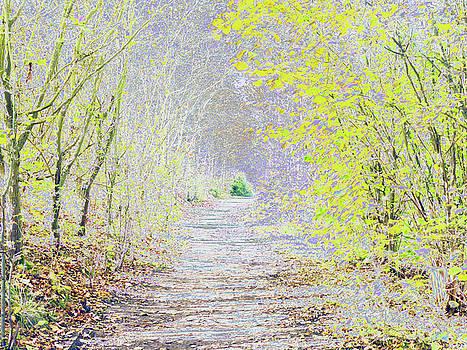 Woodland Trail by Carol Lynch