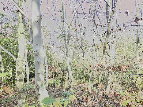 Woodland View by Carol Lynch