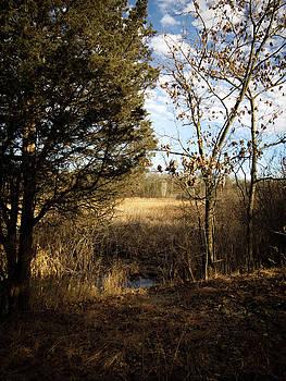 Woodland View  by Kimberly Mackowski