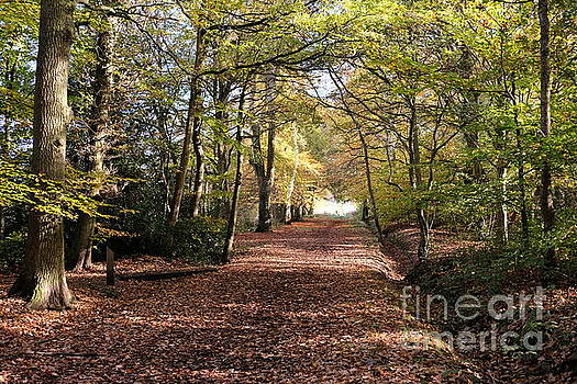 Woodland Walk In Autumn 2 by John Chatterley