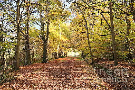 Woodland Walk In Autumn by John Chatterley