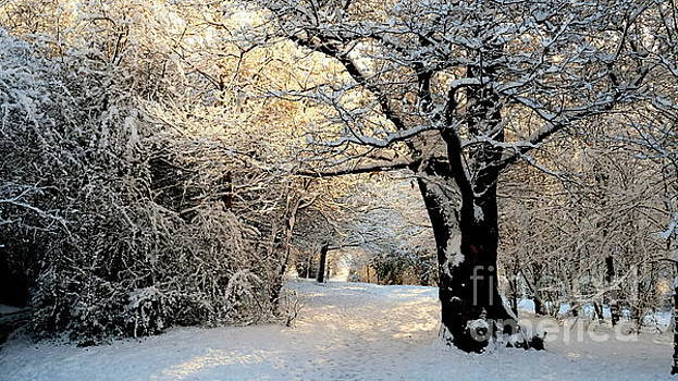 Woodland Walk In Winter by John Chatterley