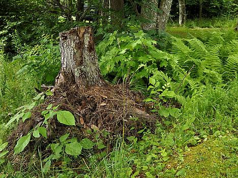 Woodlands in the Summer by Nancy De Flon