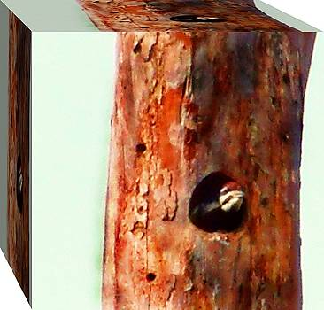 Woodpecker in a Box by Colette Merrill
