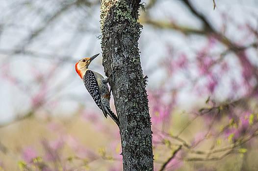Lisa Lemmons-Powers - Woodpecker in a tree