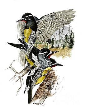 Woodpecker by Scott Rashid