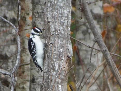Woodpecker  by Scott Welton
