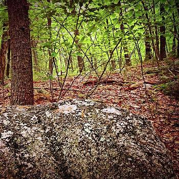Woods by Amanda Richter