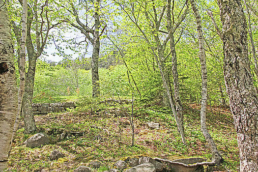Woods in Acadia Park 2 50292017 acadia  by David Frederick