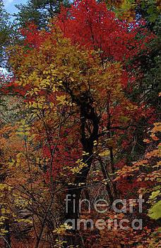 Woods in Oak Creek Canyon, Arizona by Frank Stallone