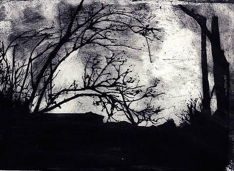 Woods by Jon Mayers