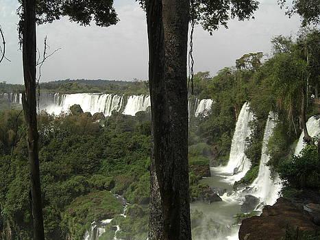 Woods of Iguassu Falls by Paul Jessop