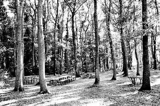 Woods by Renato Armignacco
