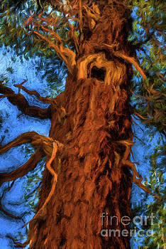 Wooly Bear Tree by Sharon Seaward