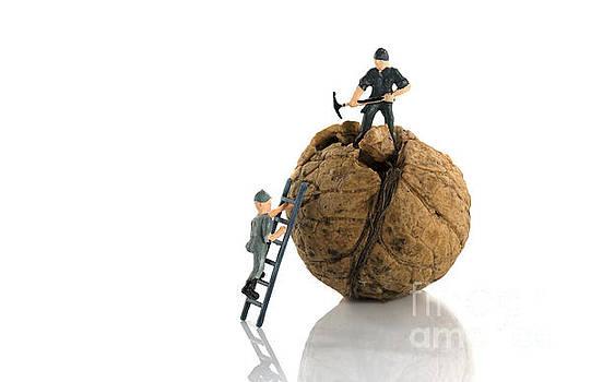 Compuinfoto  - work in progress on walnut