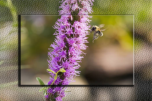 Worker Landing for more pollen by John Holloway