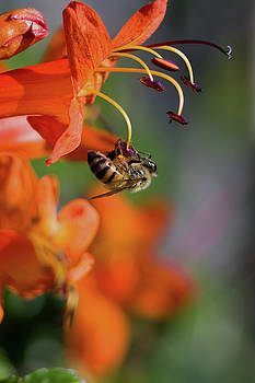 Working Bee by Stelios Kleanthous
