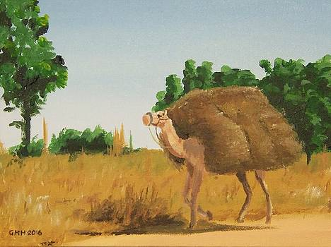 Working Camel near Sokoto by Glenn Harden