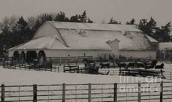 Working Cattle Barn by J L Zarek
