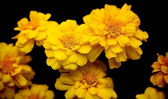Milena Ilieva - World in Yellow