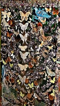 Colette Merrill - World of Butterflies