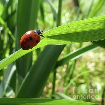 World of Ladybug 2 by Jean Bernard Roussilhe