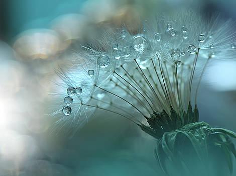 World of the Drops... by Juliana Nan