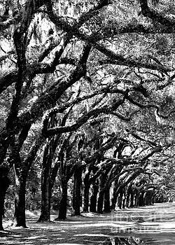 Diann Fisher - Wormsloe Georgia No.7594 BW Reflect 1of3