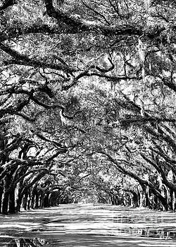 Diann Fisher - Wormsloe Georgia No.7594 BW Reflect 2of3
