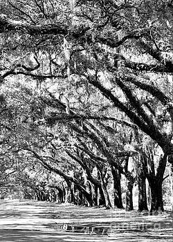 Diann Fisher - Wormsloe Georgia No.7594 BW Reflect 3of3
