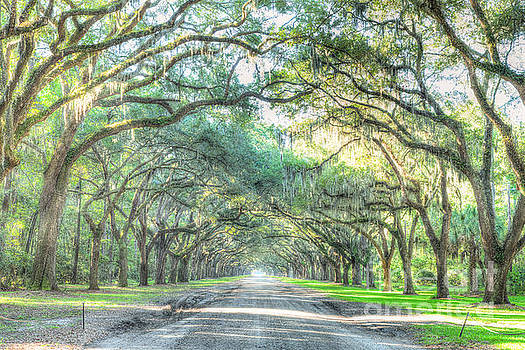 Wormsloe by Patrick Shupert