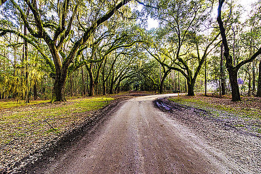 Wormsloe Road by Anthony Baatz