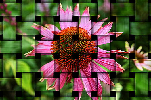 Woven Echinacea by Art  Creations