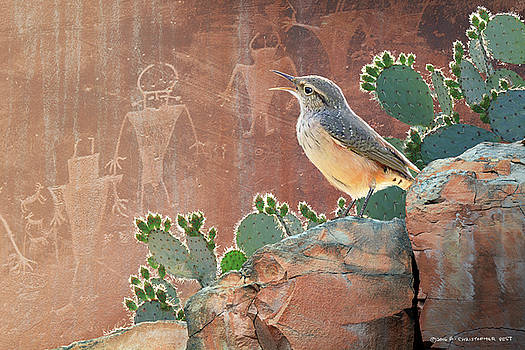 Wren At Capitol Reef Petroglyphs by R christopher Vest
