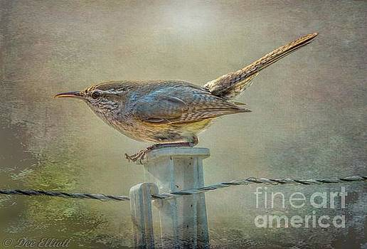 Wren by Dee Elliott