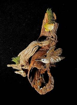 Wrens by Donna Genovese